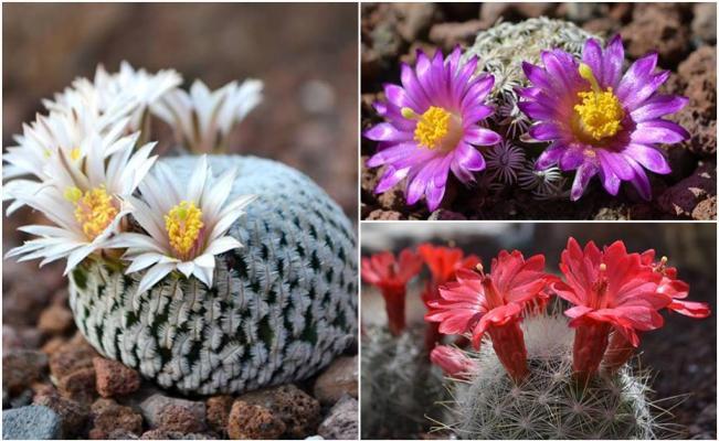 Jard n del desierto en slp alberga 60 especies de for Jardin del desierto