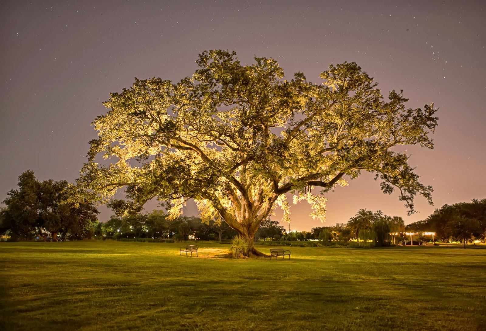 La importancia de tener árboles en las ciudades