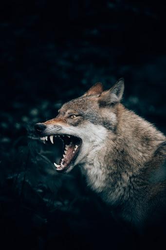 Centinela: La Cañada del Lobo entre las fauces empresariales y la 4T